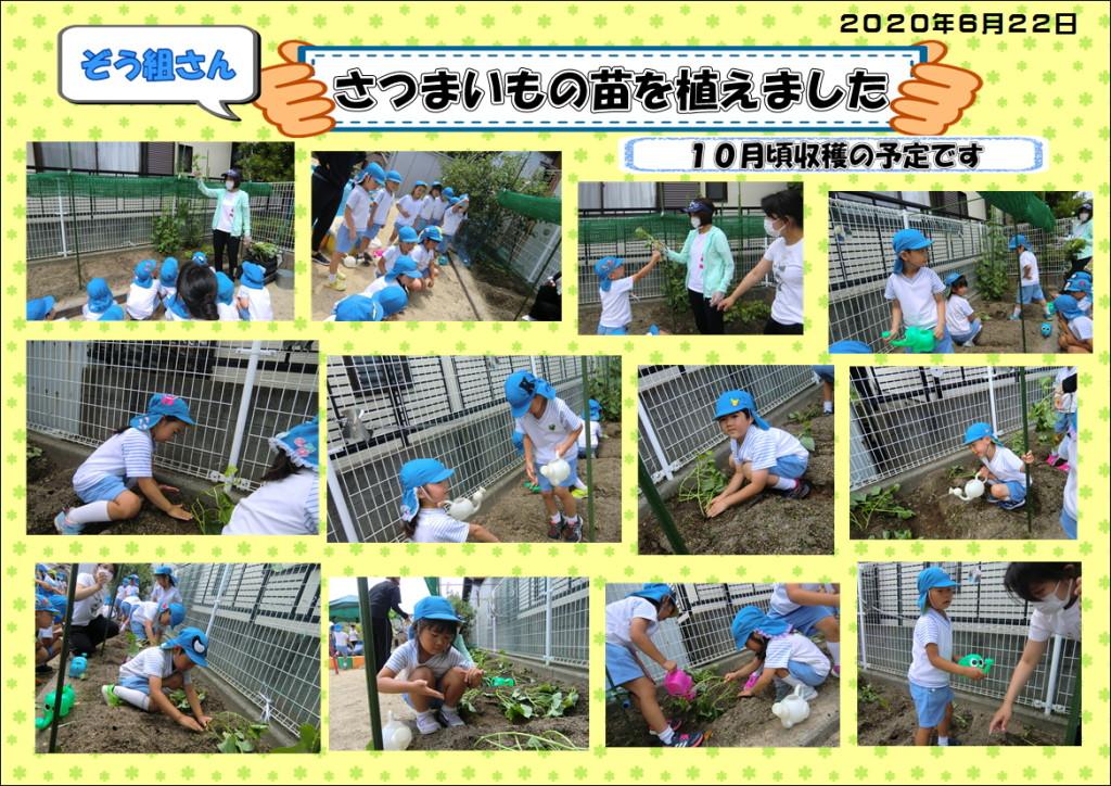 2020さつま芋植え6月22日